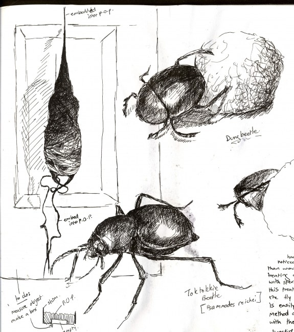 Insect sketches